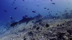 shark aquarium PR