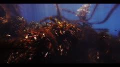 Underwater beauty scene in California kelp forest