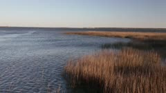 Water and Reeds Ripple in the Wind
