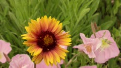 Close Up of Yellow & Orange Daisies
