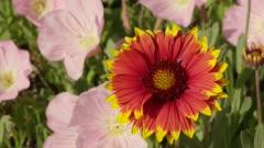 Close Up of Yellow & Orange Daisy