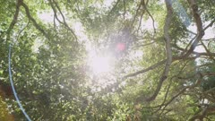Zoom towards sun, star filter in thru the tree branches