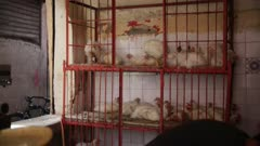 Chickens sitting inside caged metal shelving - Handheld
