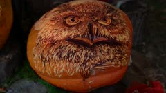 Pumpkin carved with owl