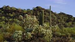 Morning at the Organ Pipe Cactus National Monument