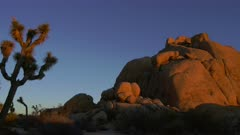 Rock formations and Joshua Trees in the morning light at Joshua Tree National Park