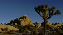 Rock formations in the morning light at Joshua Tree National Park