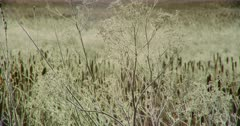 Close up of tall dry grass at the Lower Klamath Basin National Wildlife Refuge