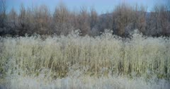 Wide shot of tall dry grass and bare trees at the Lower Klamath Basin National Wildlife Refuge