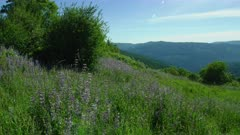 Lupines and grass growing in meadow