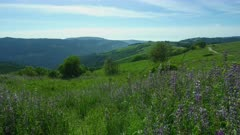 Green hills with Lupines in foreground