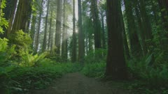 Steadicam walking in forest