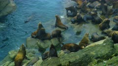 Sea lions resting on rocks at Coos Bay