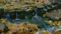 Shallow rocky spring with fall leaves