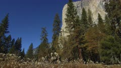 El Capitan with fall trees and wildflowers in foreground