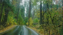 Driving in Yosemite Valley in the fall on a wet road