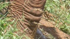 Red Elephant Tsavo