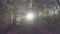 Sideways dolly tracking low aerial inside a beautiful beech forest with the sun shining through the trees.