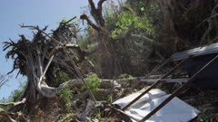 Wreckage and uprooted trees from the aftermath of a tropical storm