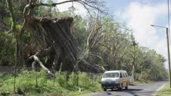Car driving by uprooted trees on a rural road