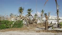 Uprooted trees from the aftermath of a tropical storm near a traditional Slit Drum
