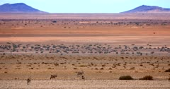 A wide shot of Gemsbok on the orange sands of the Garub desert.