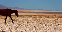 Close up shot of the shimmering heat haze over the Garub desert  thena Wild Horses walks straight past the camera