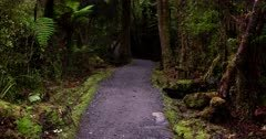 Gravel walking track in the rainforest at Lake Matheson.