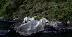 Two seals baking themselves on a huge rock at Milford Sound.