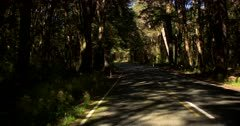 Driving along the road to Te Anau in a tunnel of rain forest trees