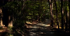 Driving along a sand road in Te Anau, in a tunnel of rain forest trees