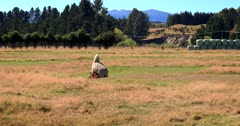 Llama's, Lama glama Mating