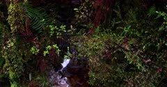 The camera follows a small river flowing in between the lush moss,pebbles and ferns at Lake Matheson.