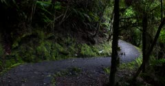 A Hiker hiking on the Rainforest path, at Lake Matheson