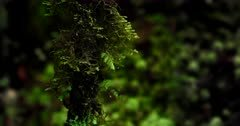 Close up shot of tiny ferns and plants growing up a thin tree trunk