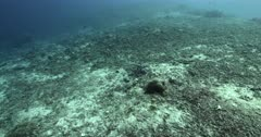 Tracking wide shot along a huge expanse of totally destroyed, dead coral.