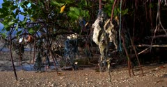 Close up shot of the Mangrove roots covered in plastic,nets, and rope