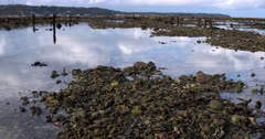 Tilt shot of the remnants of the Sea Weed Farming. Note the broken dead coral