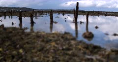 Varied Focus shot. From the stakes and their reflections on the water, left behind from the Sea weed farming, to the broken dead coral.