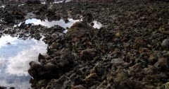 Close up of Dead broken coral, remnants of the Sea weed farming.