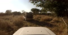 4X4 Off road driving through the bush and bumpy tracks, following a safari vehicle searching for game.