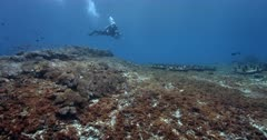 A wide shot of a diver inspects a coral rehabilitation test site, where concrete slabs have failed to grow coral.