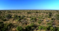 Wide Pan across the Central Kalahari after a very good rainy season showing how much vegetation has grown