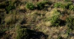 Tilt across the Central Kalahari after a very good rainy season,showing how much vegetation has grown.