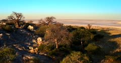 Aerial pan over the Baobab,Adansonia sp tress at Lekubu Island at sunset
