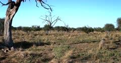 A cloud of hundreds of Red Billed Quelea,Quelea quelea swarming on the savanna grass land