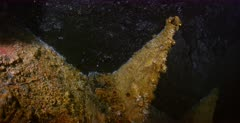 Leaking Oil trapped in the ceiling of the Yamagiri Maru. Note: the oil droplets and  Pseudomonas growth