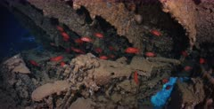 The collapsed deck and Motorbikes covered in Soldierfish on the Thistlegorm shipwreck.