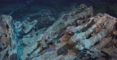 The remains of rifles, in the hold of the Thistlegorm Shipwreck with a school of Soldierfish.