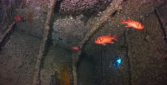 Close up of the ceiling of the Thistlegorm shipwreck,  with Soldierfish swimming